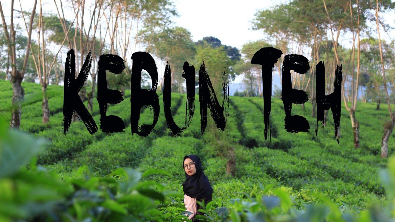Explore Malang Kebun Teh Wonosari Youtube Kab
