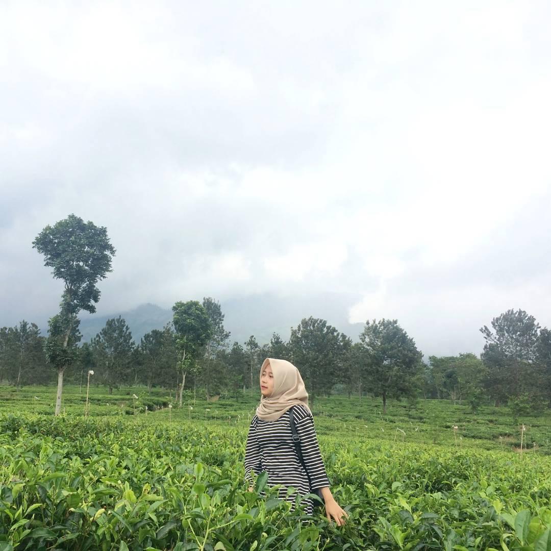 Indahnya Kebun Teh Wonosari Lawang Malang Jawa Timur Spotbaru Kab