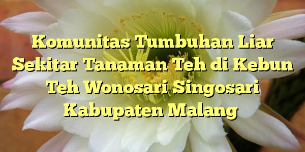 Komunitas Tumbuhan Liar Sekitar Tanaman Teh Kebun Wonosari Singosari Kabupaten
