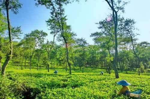 Menikmati Kesegaran Alam Kebun Teh Wonosari Malang Wisatapriangan 585 Dilihat