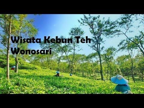 Wisata Kebun Teh Wonosari Kab Malang Youtube