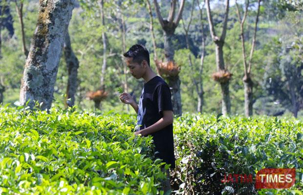 Wisata Masuk 7 Besar Destinasi Kebun Teh Wonosari Wajib Salah
