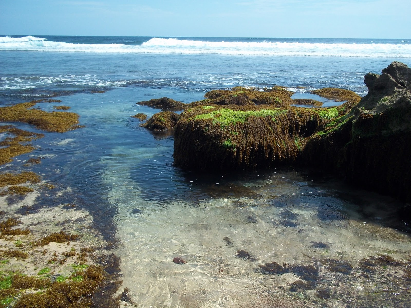 Desa Mentaraman Pantai Jonggring Saloko Kab Malang