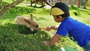 23 Rekomendasi Tempat Wisata Anak Malang Sekitarnya Tempatwisataunik Taman Kelinci