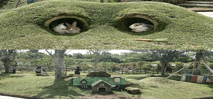 Taman Kelinci Indonesia Pas Destinasi Wisata Keluarga Kab Malang