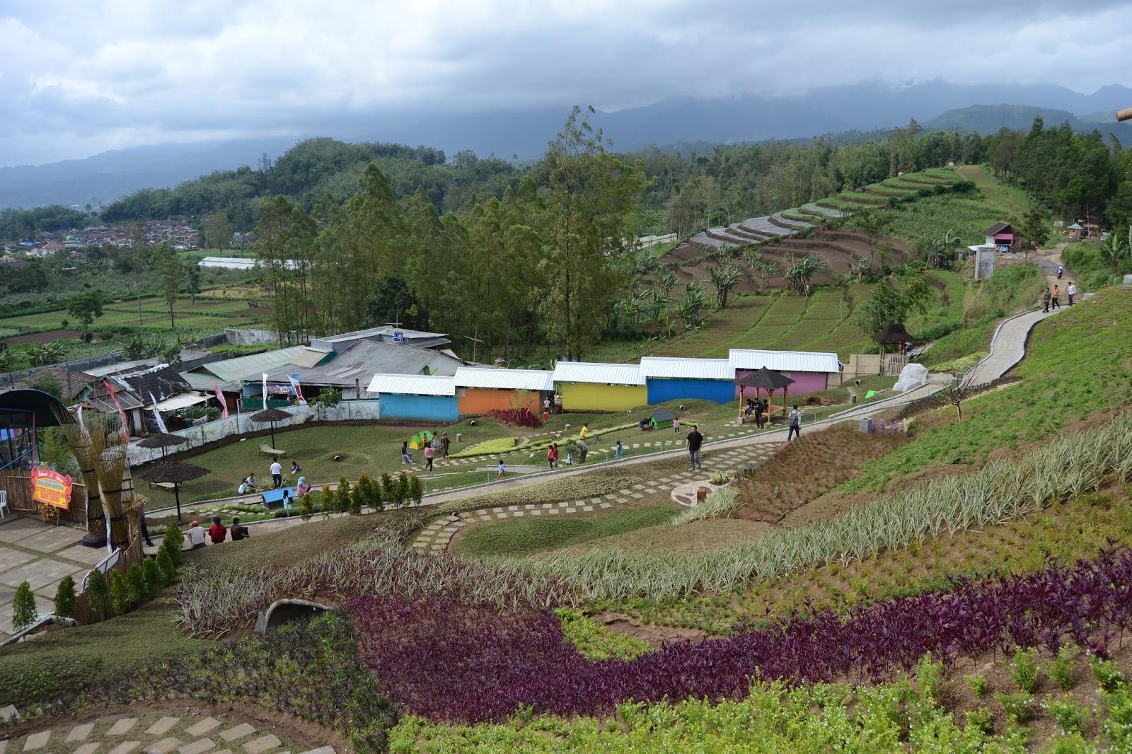 Taman Kelinci Serunya Berinteraksi Langsung Malang Jawa Timur Kab
