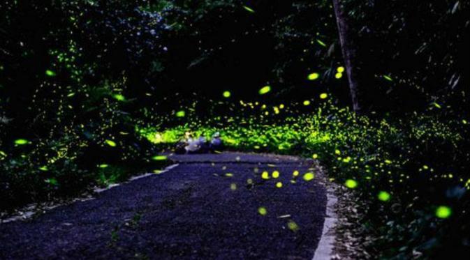 Cantiknya Taman 10 000 Kunang Global Liputan6 Menjadi Rumah Bagi