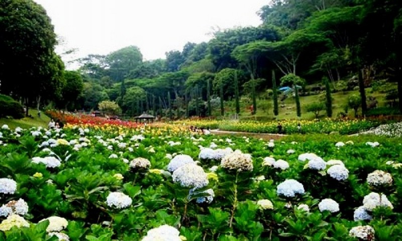 Purbalingga Dijajaki Wisata Taman Bunga Kaki Gunung Slamet Kab Malang