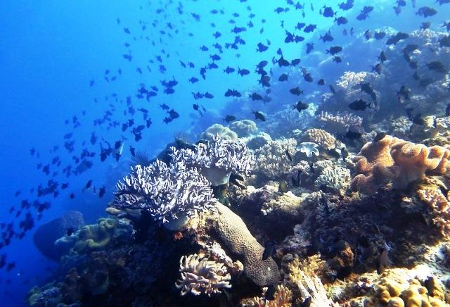 Sejuta Wisata Bahari Sejarah Budaya Alam Maluku Tengah Pantai Sirsaoni