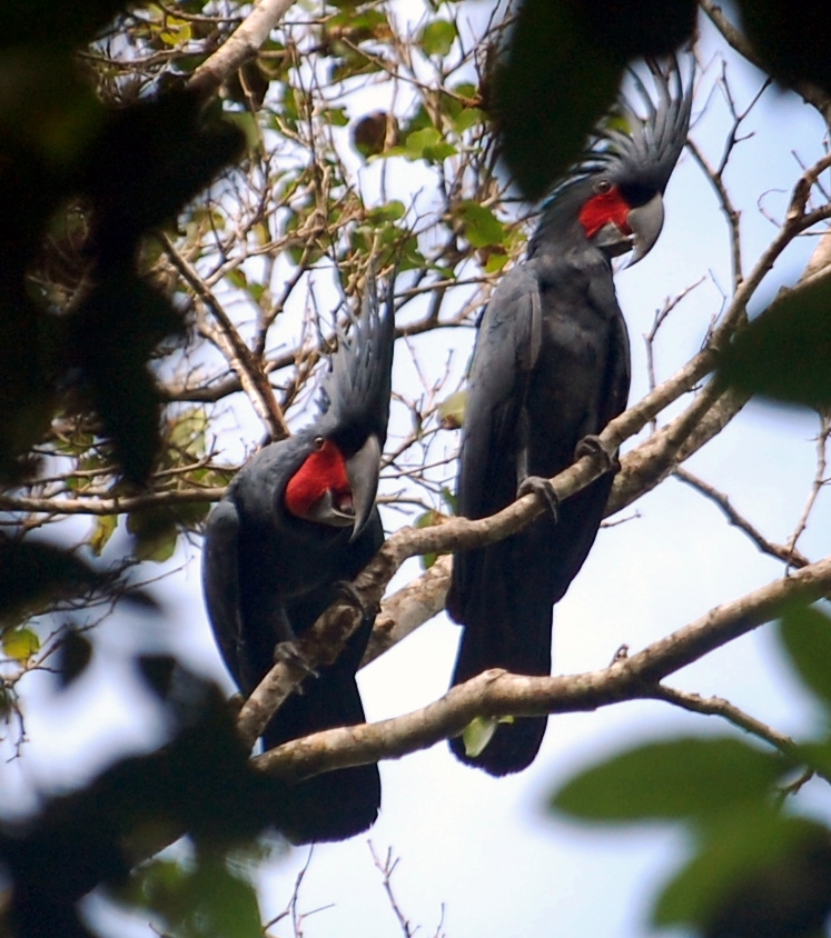 Buletin Konservasi Kepala Burung Bird Head Blog Cagar Alam Tipe