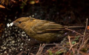 Cagar Alam Pegunungan Arfak Surga Bagi Beragam Spesies Endemik Oleh