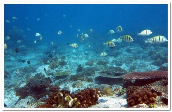 Pesona Wisata Monokwari Snorkling Laut Manokwari Jpg Fit 841 550