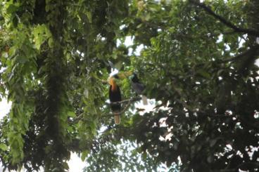 Seputar Taman Wisata Gunung Meja Manokwari Tourism Indonesia Pendaftaran Hutan