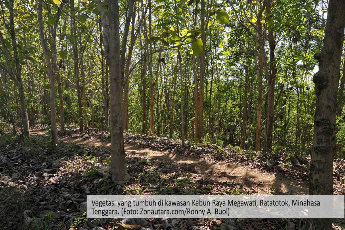 Kebun Raya Megawati Ratatotok Menunggu Terwujudnya Hutan Bagi Riset Masyarakat