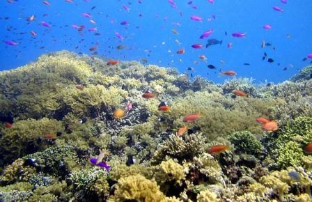 30 Daftar Tempat Wisata Manado Sulawesi Utara Menarik Dikunjungi Taman