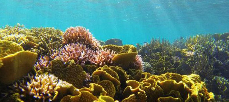 8 Tempat Wisata Manado Menarik Taman Laut Tumbak Kab Minahasa