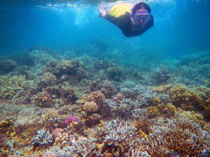 Menjelajahi 5 Spot Diving Sulawesi Jadi Surganya Bawah Laut Taman