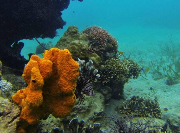 Mongabay Travel Asyiknya Selfie Menyelam Desa Tumbak Sulut Lionfish Salah