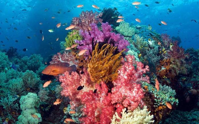 Potensi Bahari Semenanjung Utara Sulawesi Newswantara Taman Laut Tumbak Kab