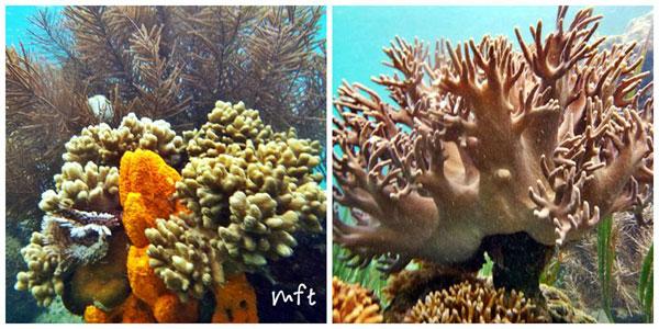 Tumbak Tempat Wisata Minahasa Tenggara Sulawesi Utara Coral Bawah Laut