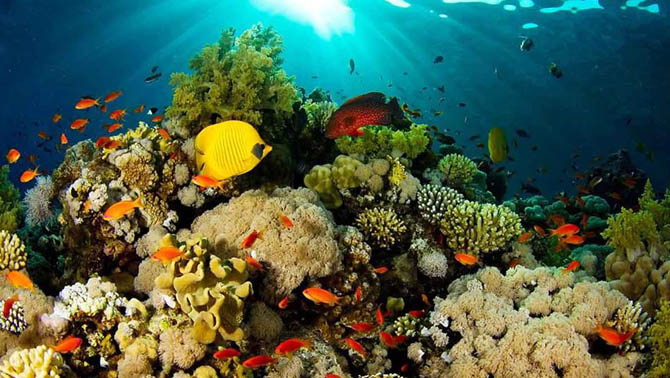 Wisata Bahari Taman Laut Tumbak Minahasa Tenggara Aneka Kab