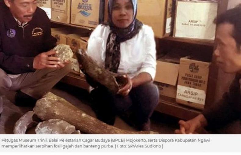 Bpcb Fosil Ngawi Kemungkinan Gajah Banteng Purba Konfrontasi Tim Balai