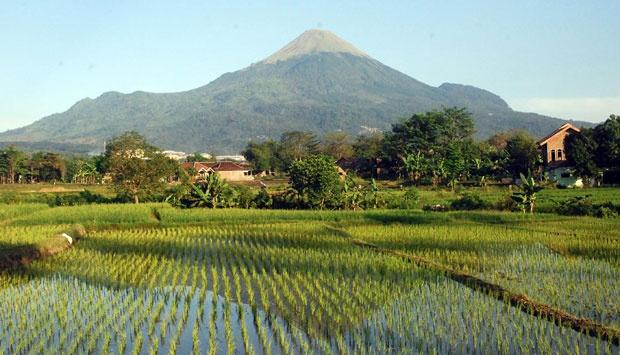 Jalan Penanggungan Mudahkan Pencurian Situs Nasional Tempo Gunung Abdi Purmono