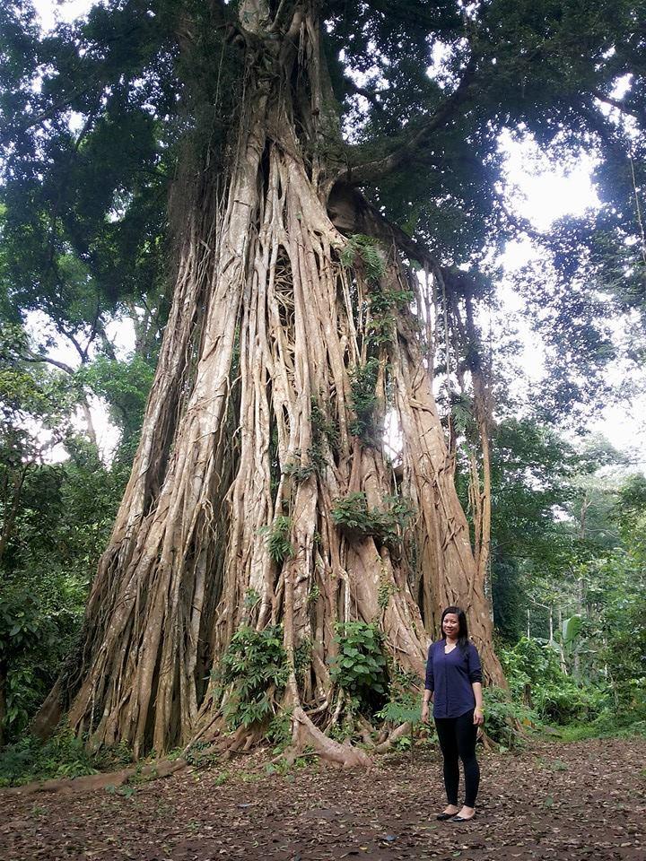 Heni Bakara Pertirtaan Zaman Airlangga Candi Jolotundo Mojokerto Pohon Beringin