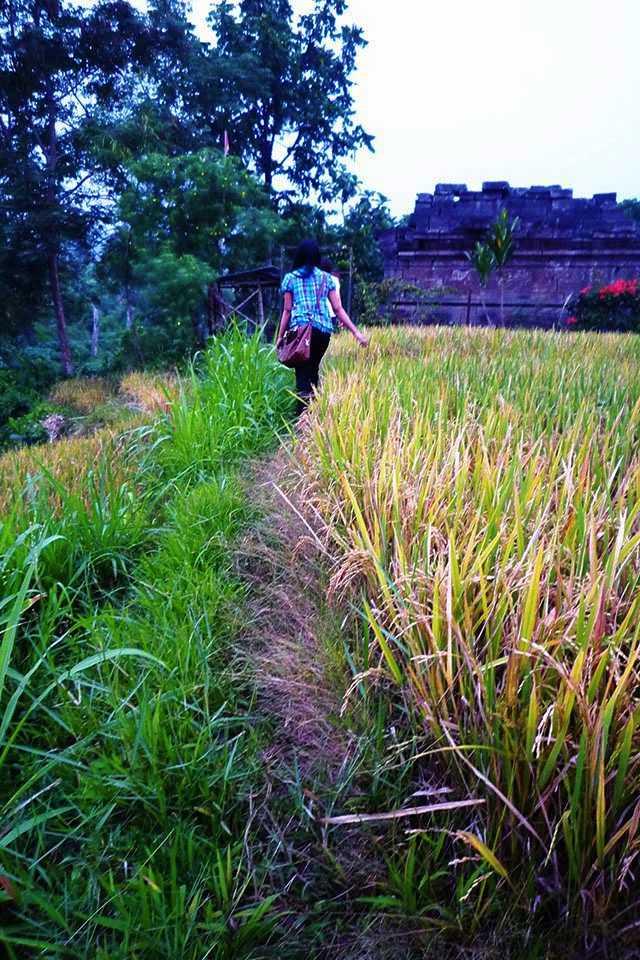 Candi Kesiman Tengah Cungkup Mojokerto Reliefnya Yahud Terletak Desa Kecamatan