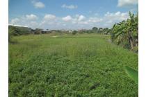Tanah Dijual Sewa Trowulan Jawa Timur Shm Raya Tawangsari Mojokerto