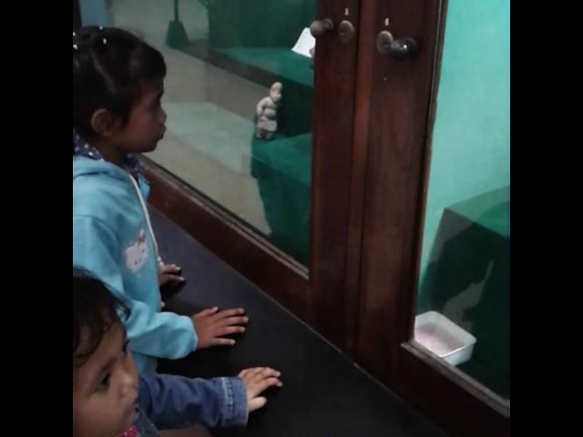 Museum Mojokerto Video Watch Hd Videos Online Registration Wisata Edukasi
