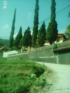 Villa Puncak Pacet Disewakan Mojokerto Kab Bangunan Komersil Kategori Properti