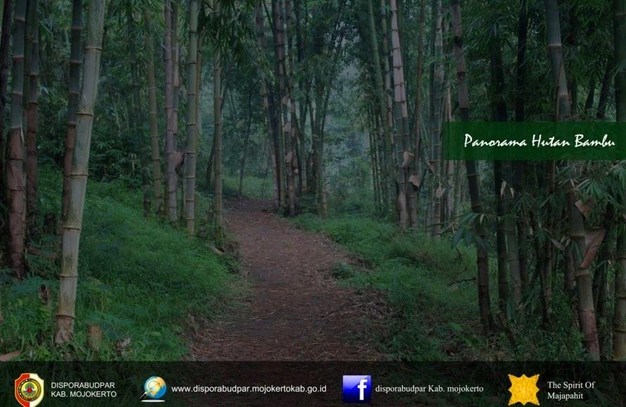 Wisata Hutan Bambu Mojokerto Air Terjun Surodadu Jawa Timur Taman