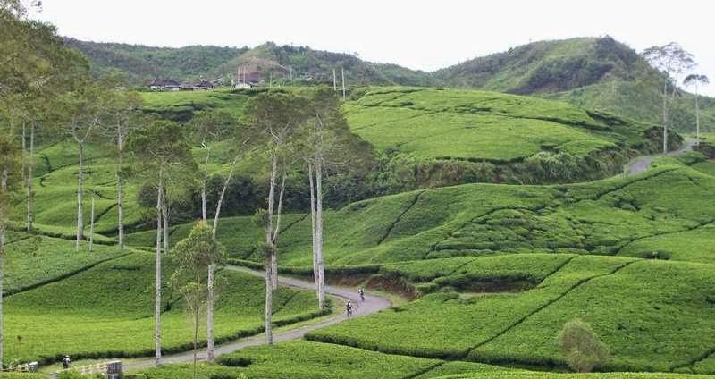 25 Tempat Wisata Kota Ngawi Jawa Timur Trip Jalan Kebun