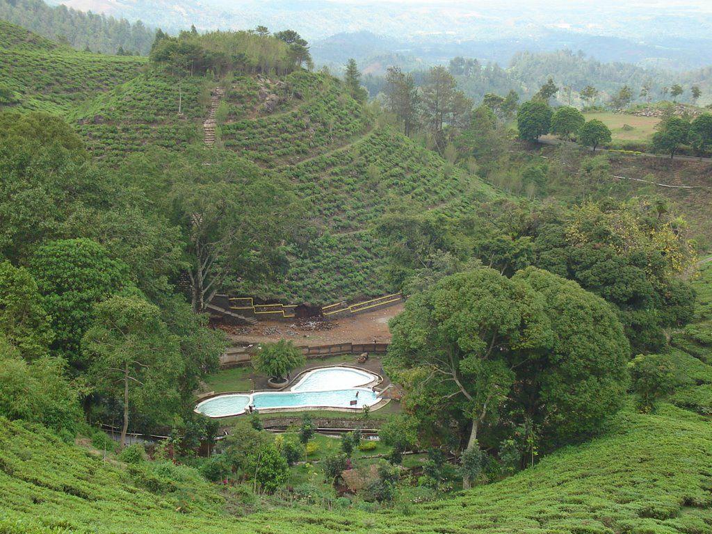 Kumpulan Tempat Wisata Ngawi Jawa Timur Gambar Kebun Teh Jamus