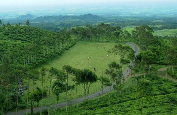 Pesona Keindahan Wisata Kebun Teh Jamus Ngawi Daftar Tempat Kab