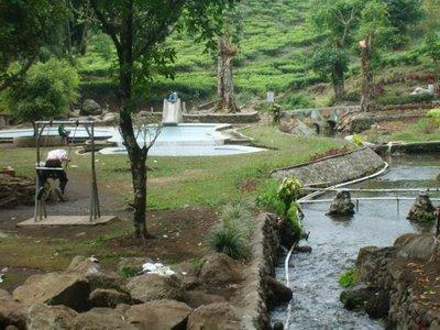 Wisata Jatim Perkebunan Teh Jamus Kebun Kab Nganjuk