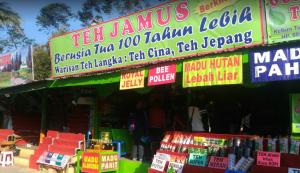 Wisata Kebun Teh Jamus Ngawi Info Lokasi Kab Nganjuk