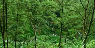 Air Terjun Teleng Seloondo Ngawi Portal Trjun Sumber Mengalir Melewati