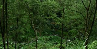 Informasi Wisata Ngawi Tebing Selo Ondo Air Terjun Teleng Kab