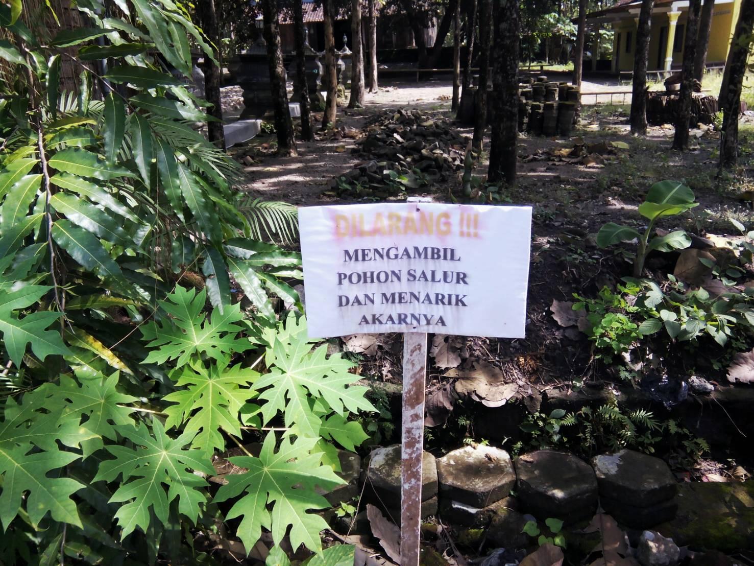 Foto Cantik Gapura Sulur Ponpes Haji Soli Mata Kodok Read