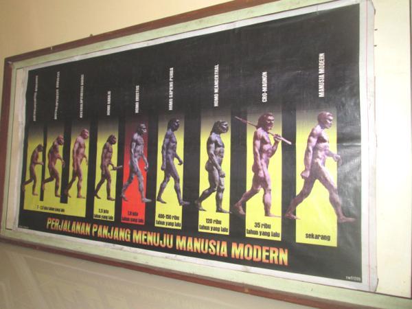 Galeri Museum Trinil Kabupaten Ngawi Musium Kab