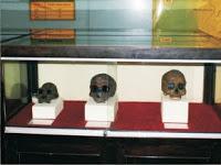 Museum Jatim Trinil Ngawi Terletak Dukuh Pilang Desa Kawu Kec