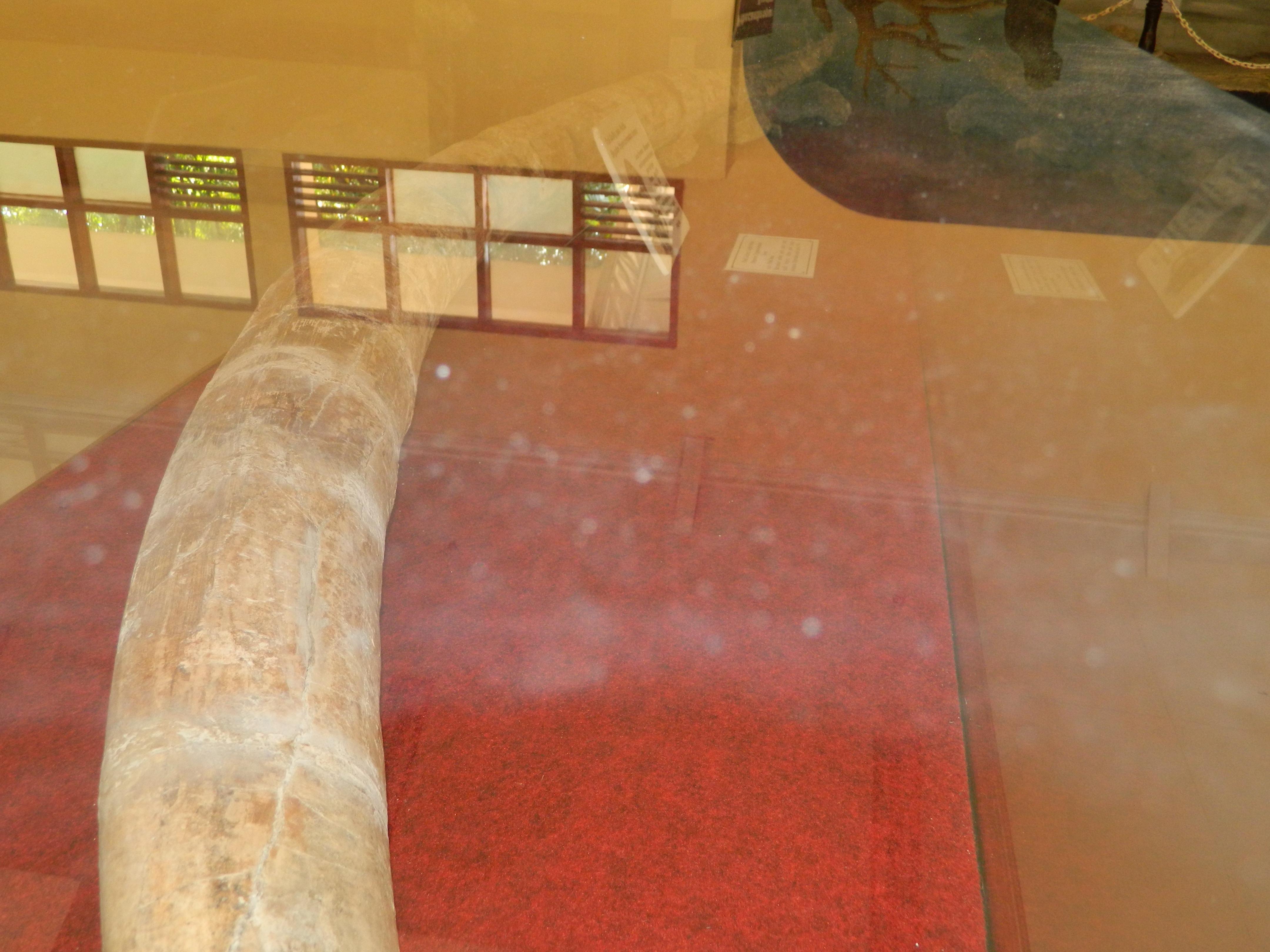 Museum Ngawikab Museumjatim Tempat Terletak Desa Kawu Kecamatan Kedunggalar Kabupaten