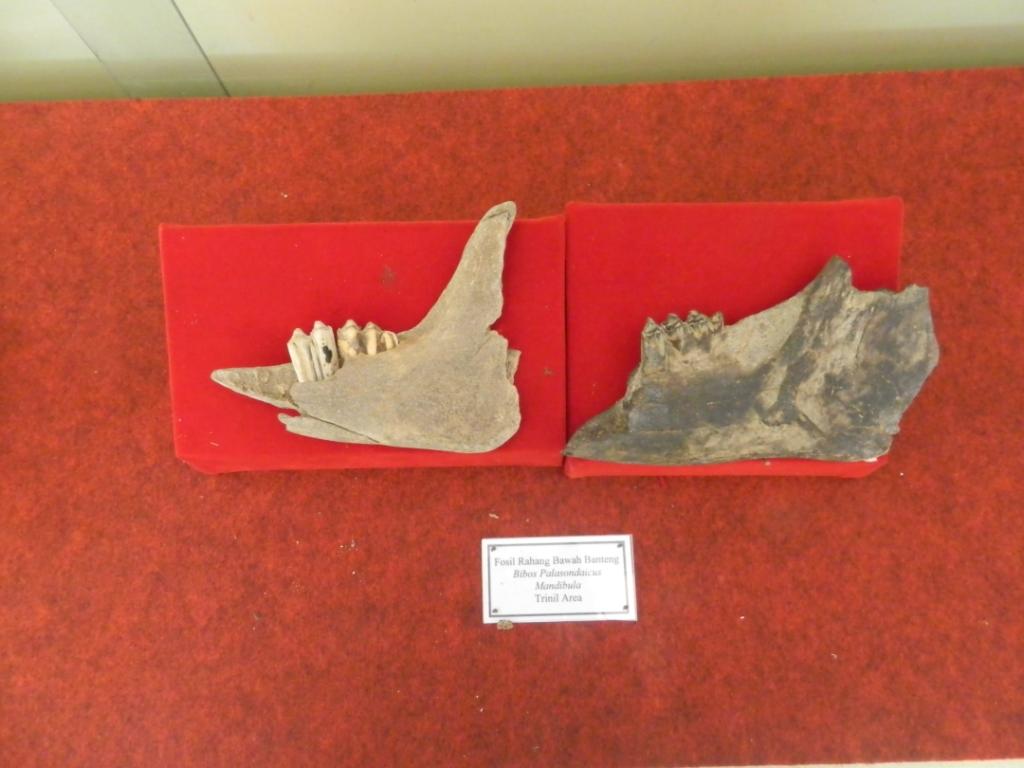 Museum Ngawikab Museumjatim Trinil Musium Kab Ngawi