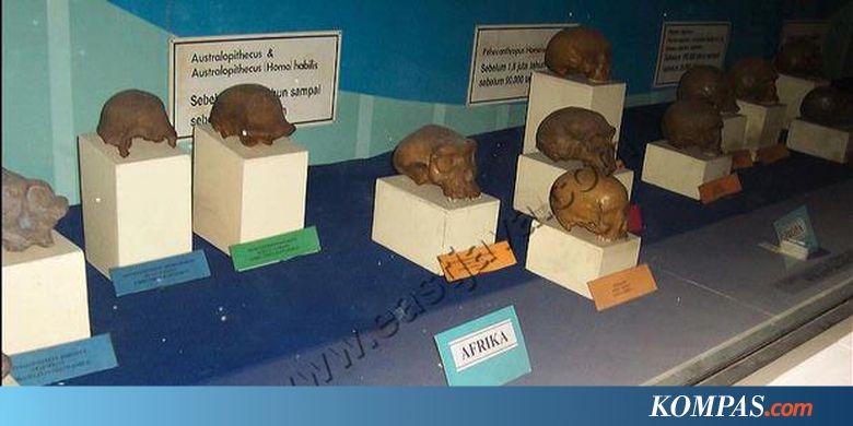 Ratusan Fosil Museum Trinil Diteliti Kompas Musium Kab Ngawi