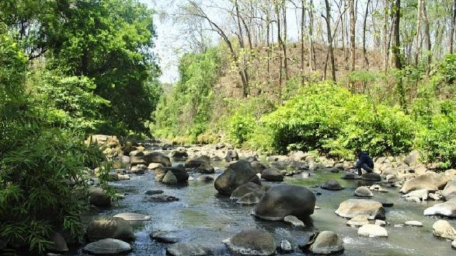 Keanehan Hutan Ketonggo Tanah Hidup Suara Wujud Viva Image Title