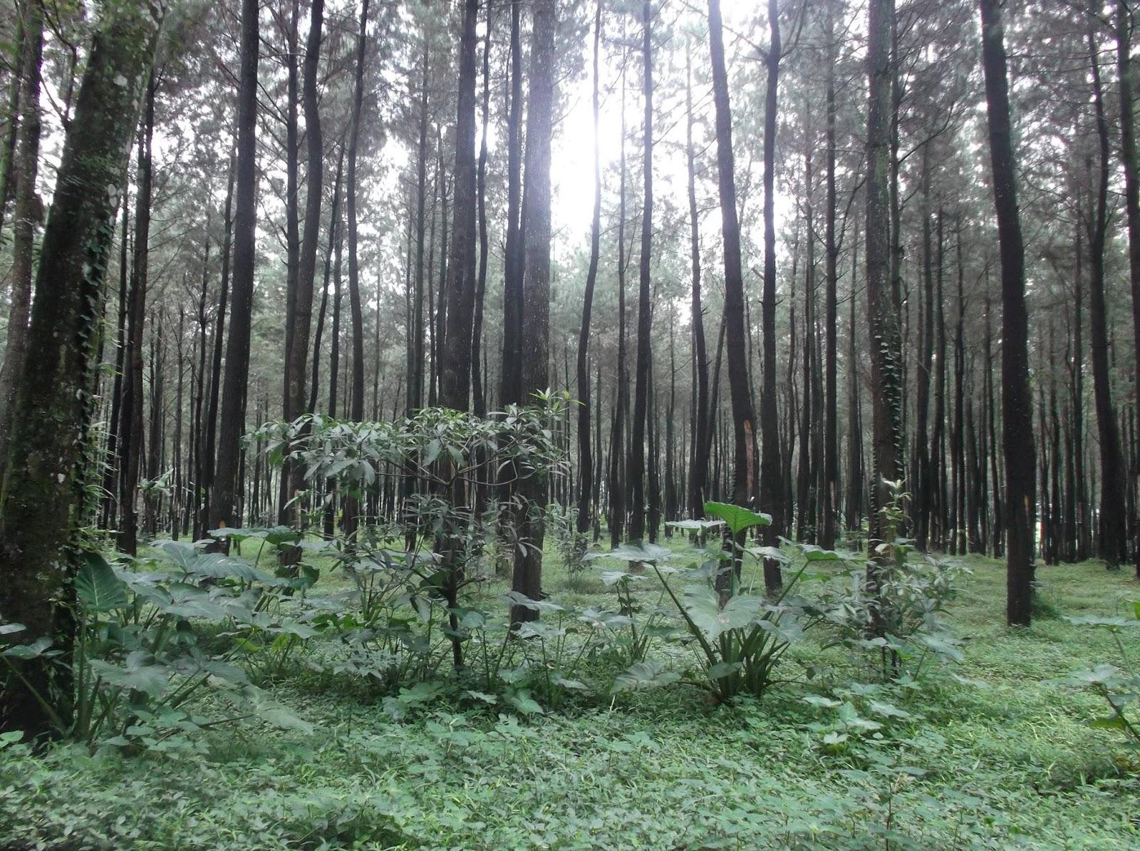 Bumi Perkemahan Seloondo Kabupaten Ngawi Jatim Situs Rapi Pemandangannya Reco