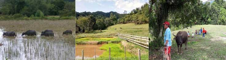 Sumber Daya Alam Ajaib Wilayah Perbatasan Krayan 4 Kecamatan Tengah