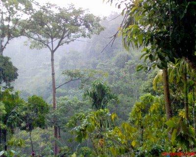 Nunukan Kota Perbatasan Kalimantan Timur Inilah 12 Persoalan Hutan Lindung